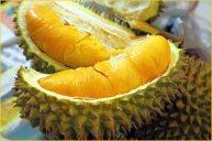 Jual Bibit Tanaman Buah - 0878 55000 800 - Durian 2